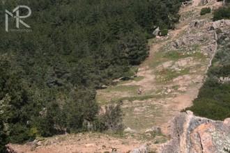Sardinia Rally  1. etapa